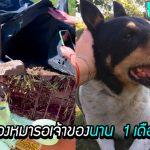 หมาเฝ้ารอเจ้าของตรงจุดที่เขาตาย เป็นเวลาถึง 1 เดือนเต็ม เพื่อรอพบเขาอีก