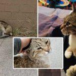 'แมวจร' แฮปปี้เมื่อหญิงใจดีกลับมารับมัน และยังพาไปอยู่ในบ้านที่เต็มไปด้วยความรัก