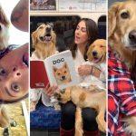 หญิงสาวเล่าเรื่องราวของเธอกับสุนัข เพื่อให้เห็นว่าการมีสุนัขในชีวิตมันยอดเยี่ยมแค่ไหน