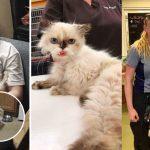 แมวสุดที่รักของครอบครัว หายตัวไปนาน 3 ปี แต่สุดท้ายมันก็ได้กลับไปหาคนที่รัก