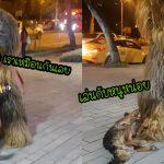 หมาจรตื่นเต้นมากเมื่อเห็น 'ชิวแบคคา' อยู่บนถนน จึงเข้าไปเล่นไปกอดเขาอย่างสนุกสนาน