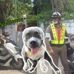 น้องหมาบูลลี่ออกจากบ้านไปตามหาคุณยาย แต่ดันหลงทาง พี่ตำรวจเลยพาไปรอที่โรงพัก