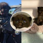 ลูกแมวถูกทิ้งเดินเรียกหาแม่ข้างถนน พลเมืองดีเห็นเข้า จึงช่วยมันเอาไว้ได้ทันเวลา
