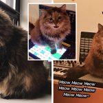 เจ้าแมวซึมซับความเป็นศิลปินจากทาส ผสมดนตรีเองจนเกิดเป็นเพลงสุดผ่อนคลาย