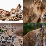 รวมภาพ 'สัตว์ป่า' ที่กำลังมีความรัก จนทำให้ธรรมชาติอบอวลไปด้วยกลิ่นอันหอมหวาน