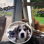 20 ภาพเหล่าสัตว์เลี้ยงที่ 'อยากเข้าบ้าน' ทั้งอ้อน ทั้งขู่ เห็นแล้วช่างน่าแกล้งจริงจริ๊ง