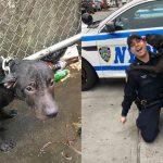 ตำรวจหนุ่มช่วย 'สุนัข' ที่ถูกมัดกลางสายฝน เจ้าตูบจึงตอบแทนด้วยการเป็นคู่หูแสนดีของเขา