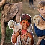 ช่างภาพเดินทางรวบรวมมิตรภาพอันงดงามระหว่าง 'มนุษย์กับสัตว์'  จากทั่วทุกมุมโลก