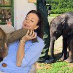 ช้างน้อยได้คนใจดีช่วยชีวิตไว้ มันจึงเดินตามติดเธอไปทุกที่ เหมือนกับหมาไม่มีผิด