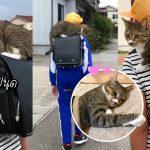 แมวกลัวทาสไปโรงเรียนคนเดียวจะเหงา ขึ้นนั่งบนกระเป๋าสะพายหลังไปส่งเขาทุกวัน