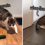 แมวทำลายความคาดหวังของทาสซะไม่เหลือ เพราะมันเมินของที่แมวชอบโดยสิ้นเชิง