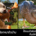 มาดู 10 เรื่องราวความฉลาดของสัตว์เลี้ยง แล้วคุณจะรู้ว่าพวกมันแสนรู้กว่าที่คุณคิด!!