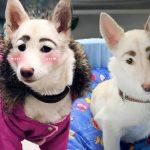 """หมาจรจัด Frida ดังจนมีคนรับเลี้ยง หลังคนเห็น """"คิ้ว"""" ที่แสนสวยงามของมัน"""