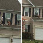 ตููบ 2 ตัวแอบขึ้นไปเล่นบนหลังคา เพื่อนบ้านเห็นจึงพยายามหาวิธีพาพวกมันกลับเข้าบ้าน