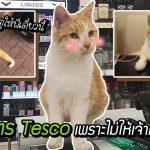 ร้าน Tesco โดนชาวเมืองขู่คว่ำบาตร เพราะประกาศห้ามให้แมวเจ้าถิ่นเข้าร้าน