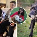 หญิงเคยสัมผัสถึงความอบอุ่นของหมาแก่ ต่อมาจึงพยายามช่วยพวกมันให้ได้มากที่สุด