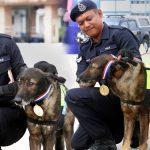 หมาตำรวจคนเก่ง ได้รับเหรียญเป็นรางวัล หลังจากที่มันช่วยปิดฆาตกรรมคดี