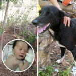 พี่หมาพิการเจอทารกน้อย ซึ่งถูกคุณแม่วัยเยาว์ฝังทั้งเป็น ทำให้ช่วยชีวิตน้องไว้ได้ทัน
