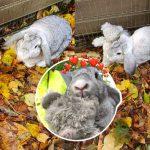 กระต่ายถูกทิ้งในกล่อง รู้สึกตื่นกลัวมาก เลยกอดตุ๊กตาหมีตัวโปรดไม่ยอมปล่อย