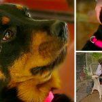หมาพลัดหลงหลังจากเกิดอุบัติเหตุ เจอหญิงใจดีช่วยพามันไปเจอครอบครัวอีกครั้ง