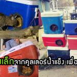 หนุ่มทำบ้านให้ 'แมวจรจัด' จากคูลเลอร์น้ำแข็ง เพื่อให้พวกมันมีที่พักพิงที่อบอุ่นในฤดูหนาว
