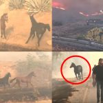 'คุณยายม้า' เสี่ยงชีวิตวิ่งกลับไปยังฟาร์มที่ถูกไฟไหม้ เพื่อช่วยลูกหลานที่ยังติดอยู่ในนั้น