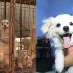 หมาน้อยถูกช่วยจาก 'ฟาร์มเนื้อ' ได้สัมผัสกับชีวิตดีๆ ที่เต็มไปด้วยความรักและความสุข