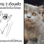 หนุ่มวาดการ์ตูนสั้นๆ เพื่อบอกว่าเจ้าแมวตัวน้อย ช่วยเขาจากโรคซึมเศร้าได้ยังไง