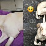 'สุนัขจรจัด' บาดเจ็บจนขยับไม่ได้ จึงได้แต่นั่งร้องขอความช่วยเหลือท่ามกลางสายฝน…