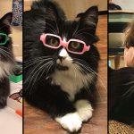 แมวเหมียวทำตัวเป็นตัวอย่างที่ดี สวมแว่นตาเพื่อให้เด็กๆ เห็นแล้วอยากใส่บ้าง