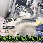 อย่างฮา เมื่อจู่ๆ พี่ไซก็หอนแข่งเสียงน้องร้องไห้ เอ็งจะร้องตามเขาทำไมเนี่ย!?