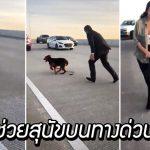 ผู้คนบนทางด่วนพร้อมใจกันหยุดรถ เพื่อช่วยหมาที่กำลังตื่นตกใจให้ปลอดภัย