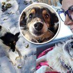 หมาถูกล่ามโซ่ทิ้งไว้กลางหิมะ รู้สึกอบอุ่นไปทั้งกายและใจ เมื่อเห็นอาสาสมัครมาช่วย