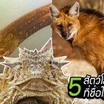 พบ 5 สัตว์โลก ที่ชื่อไม่ตรงปกเลยตัวจริงเลย ฟังแล้วชวนเข้าใจผิดแบบสุดๆ