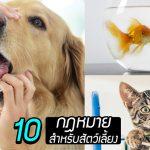 มาดู 10 กฎหมายสำหรับสัตว์เลี้ยง ที่ช่วยคุ้มครองสัตว์ และทำให้พวกมันมีชีวิตที่ดี