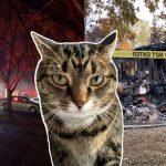 แมวรอดอย่างปาฎิหาริย์ หลังช่วยปลุกทาสและเพื่อนบ้าน เพื่อให้พวกเขาหนีไฟไหม้
