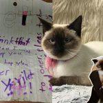 เจ้าแมวถูกพบอยู่ข้างถนน พร้อมกับโน๊ตบอกลาจากเด็กหญิง ซึ่งทำให้คนที่อ่านซึ้งใจ