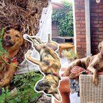 สุนัขติดอยู่ในซากกิ่งไม้และกำลังจะตาย โชคดีมีคนผ่านมาเห็นและช่วยมันไว้ได้ทันเวลา