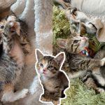 สองพี่น้องแมวมีเพียง 2 และ 3 ขา ถูกทอดทิ้ง พวกมันจึงได้แต่กอดปลอบใจกันและกัน