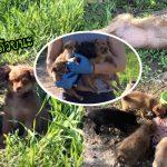 เมื่อ 'ลูกหมาถูกทิ้ง' เห็นผู้ช่วยเหลือ มันจึงนำทางพวกเขาไปหาพี่น้องของมันอีก 4 ตัว
