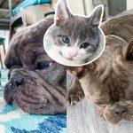 ลูกแมวถูกพบลำพัง ได้พบกับพี่ๆ หมาในบ้านหลังใหม่ ติดใจจนไม่ยอมอยู่ห่างเลย