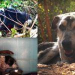 สุนัขบาดเจ็บสาหัส ซ่อนตัวในพุ่มไม้และรอคอยความตาย แต่โชคดีที่มีคนมาช่วยไว้ได้ทันเวลา