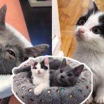 'ลูกแมวกำพร้า' แฮปปี้มากๆ เมื่อได้พบน้องสาวที่มีนิสัยเหมือนกัน กลายเป็นคู่หูที่ลงตัวสุดๆ