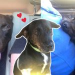 หญิงตั้งใจรับเลี้ยงหมา 1 ตัวเพื่อช่วยชีวิตมัน แต่พอกลับบ้านมาก็ได้หมามา 3 ตัวแล้ว