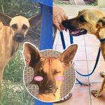 อาสาสมัครเก็บหมาผอมโซมาดูแล สอนให้มันรู้จักความสุข เปลี่ยนไปเหมือนมีชีวิตใหม่