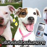 บริษัทเบียร์ช่วยหมาจรจัดหาบ้าน โดยการแปะรูปพวกมันบนกระป๋องเบียร์ของพวกเขา