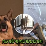 หมาส่งจดหมายบอกลาคนส่งของคนโปรด พร้อมฝากของขวัญผ่านเขาไปให้เพื่อนหมา