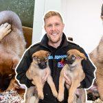 พาชมความน่ารัก ของแก๊งเยอรมันเชพเพิร์ดตัวน้อย ว่าที่หมาตำรวจในวัยกำลังซน