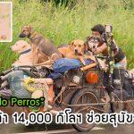 ชายใจดีเดินเท้ากว่า 14,000 กิโลฯ พร้อมรถเข็น เพื่อช่วยเหลือสุนัขจรจัดที่ไม่มีใครเหลียวแล