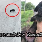 'ลูกหมาจรจัดตาบอด' เดินโซซัดโซเซหาอาหาร แต่ผู้คนก็ยังเดินผ่านมันโดยไม่สนใจใยดี